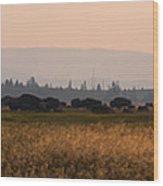 Herd Of Bison Grazing Panorama Wood Print