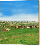 Herd Of Cows Under A Blue Sky In Green Hills Wood Print