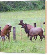 Herd Of Elk Leaping - Western Oregon Wood Print