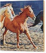 Herd Of Horses Wood Print
