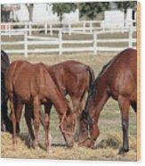 Herd Of Horses Ranch Scene Wood Print