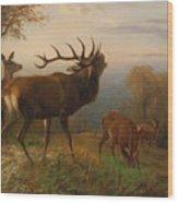 Herd Of Red Deer Wood Print