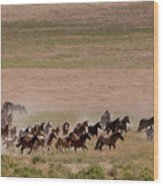 Herd On The Move Wood Print