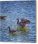 Herding Geese Wood Print