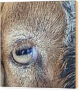 Here's Looking At You Kid - The Truth About Goats' Eyes Wood Print