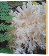 Mushroom Hericium Coralloid Wood Print