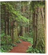 Heritage Forest 2 Wood Print
