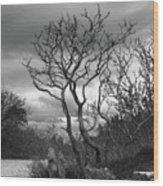 Hermit Island Tree 0912 Wood Print