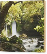 Hermon Stream Nature Reserve Banias Wood Print