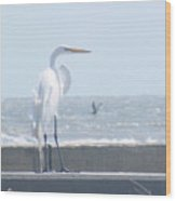 Heron At Rest Wood Print