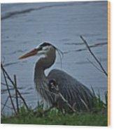 Heron At The Rock River Wood Print