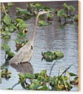 Heron Fishing In The Everglades Wood Print