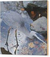 Heron Fishing Photograph Wood Print