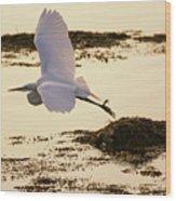 Heron Fly-by Wood Print