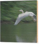 Heron Glide Wood Print