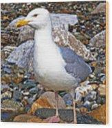 Heron Gull Wood Print