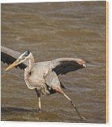 Heron - Hokey Pokey Wood Print