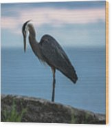 Heron In Colchester Wood Print