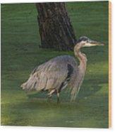 Heron In Dark Pond Wood Print