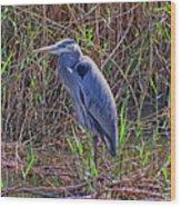 Heron In Marshes Wood Print