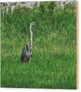 Heron In The Grasses Wood Print