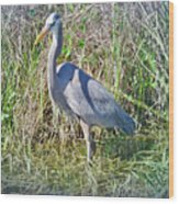 Heron In The Wetlands Wood Print