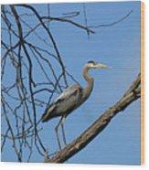 Heron In Tree  4998 Wood Print