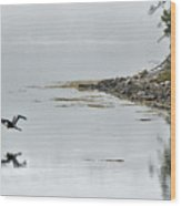 Heron Off Ship's Harbor Cove Wood Print