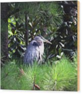 Heron On Pinetree Wood Print