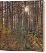 Heron Pond Cypress Trees Wood Print