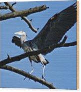 Heron Spreads Wings Wood Print