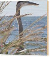 Heron Through The Grass Wood Print