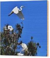Heron Trio Wood Print