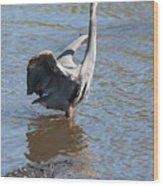 Heron With Gator Wood Print