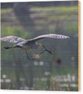 Heron With Nesting Material Wood Print