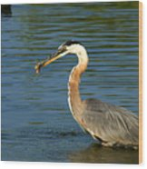 Herons Catch Wood Print