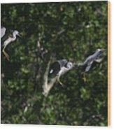 Herons Landing Wood Print