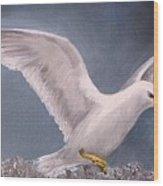 Herring Gull Wood Print