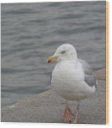 Herring Gull In Copenhagen Wood Print