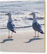 Herring Gulls On The Beach Wood Print