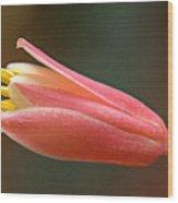 Hesperaloe Parviflora - False Agave Wood Print