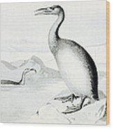 Hesperornis Regalis, Flightless Bird Wood Print