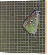 Hessel's Hairstreak Butterfly Wood Print