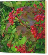 Hi Bush Cranberry Close Up Wood Print
