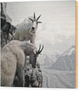Hi We Are The Mountain Goats Wood Print
