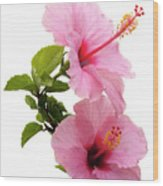 Hibiscus 7 V3 Wood Print
