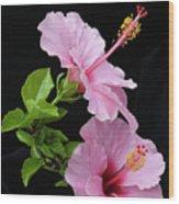 Hibiscus 7 V4 Wood Print