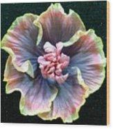 Hibiscus 9 Wood Print