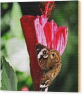 Hibiscus Aflutter Wood Print