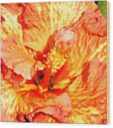 Hibiscus And Bees Wood Print